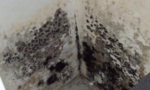 Как да се справим с мухъла в банята