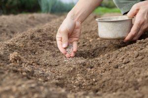 Почва и тор