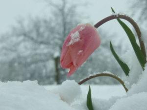 Грижа за цветя през зимата