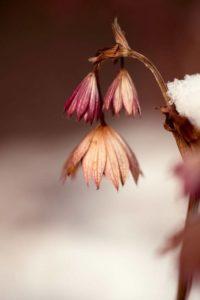 Цветята и техния покой през зимата